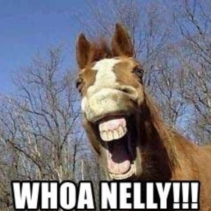 """Horse with mouth open and text """"woah nelly!!"""" overlaid on top"""